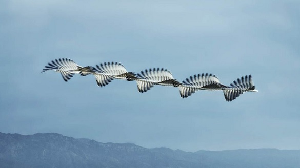 lines-of-flight-3