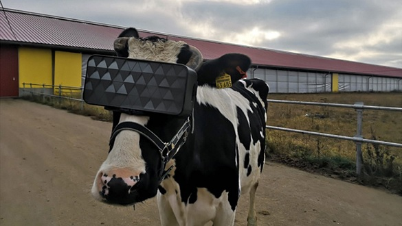 cyberspace-for-cattle-1