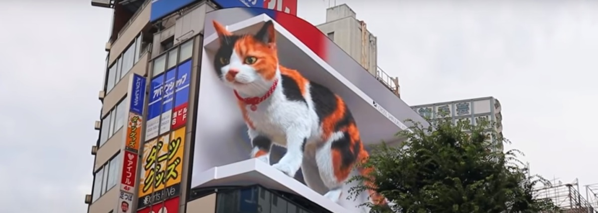 Big cats inJapan